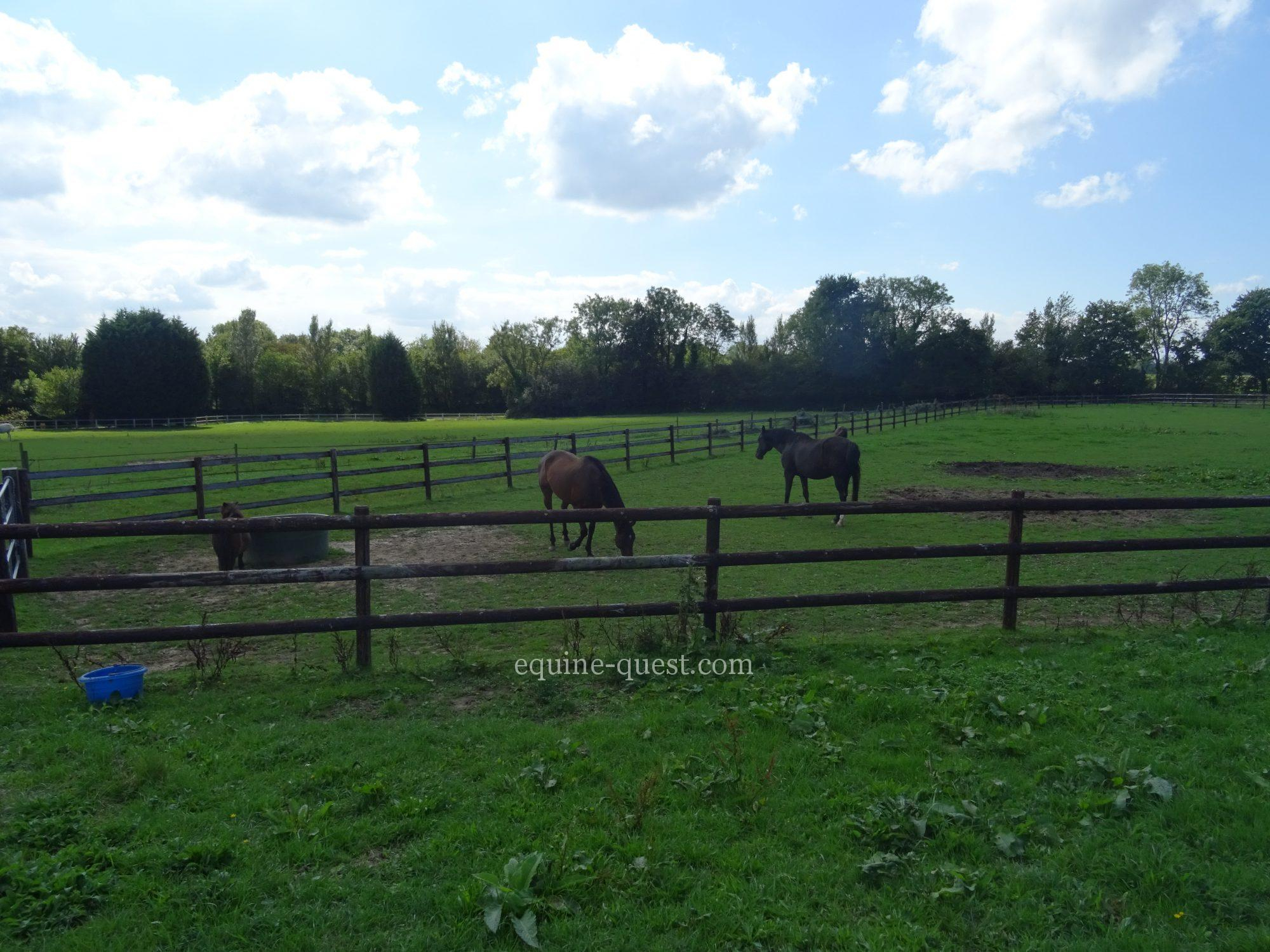 Normandy –  Deauville area – Equestrian center