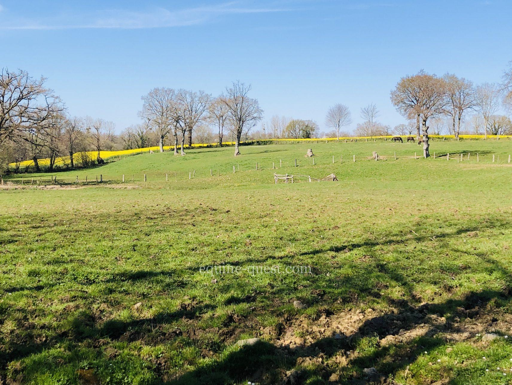 Equestrian property- Granville area- 25 hectares